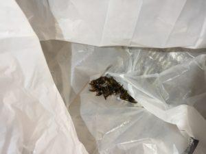 ハチの亡骸